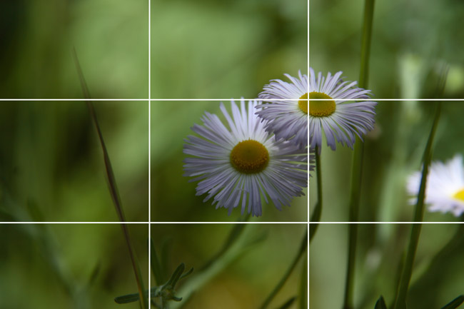In this one, the flowers tend toward the upper right and the stem on the right flower runs more or less up the right third line.