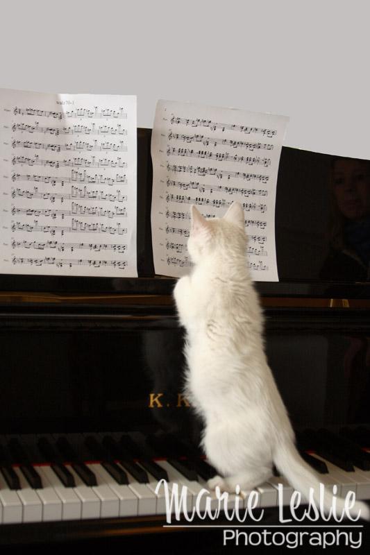 catpriccio--cat photography