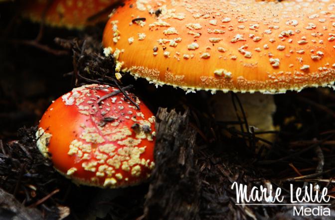mushroom, orange, toadstool, rocky mountain national park, colorado