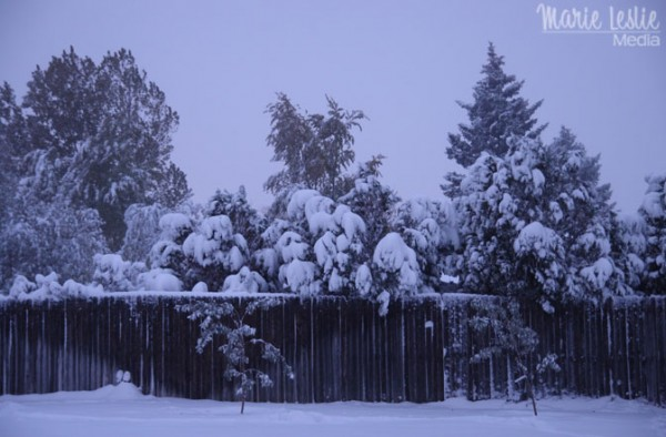 snowfall, snow day, snow and trees