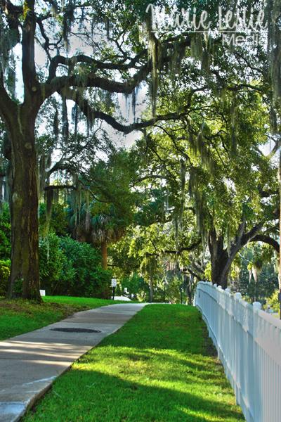 Tallahasee sidewalk, Tallahassee, Florida