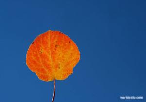 Fall leaves, Colorado