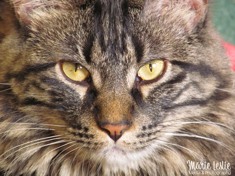Techniques for Better Pet Photography--photographing pet cats