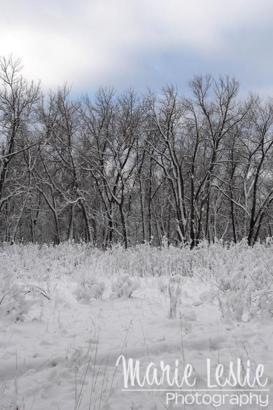 Cherry Creek Park