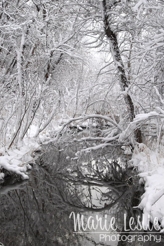 Cherry Creek Winter Colorado