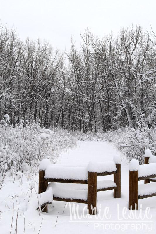Snowy Cherry Creek State Park