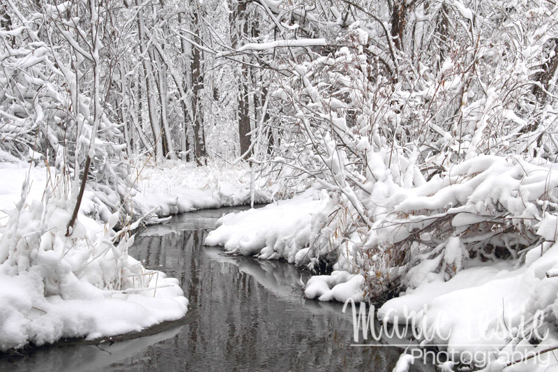 Snowy Cherry Creek