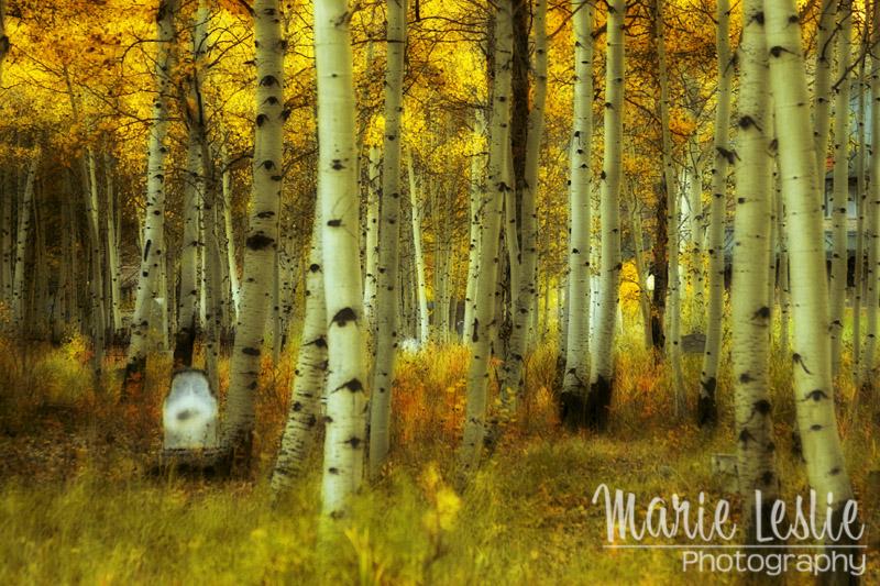 Alvarado Autumn 1